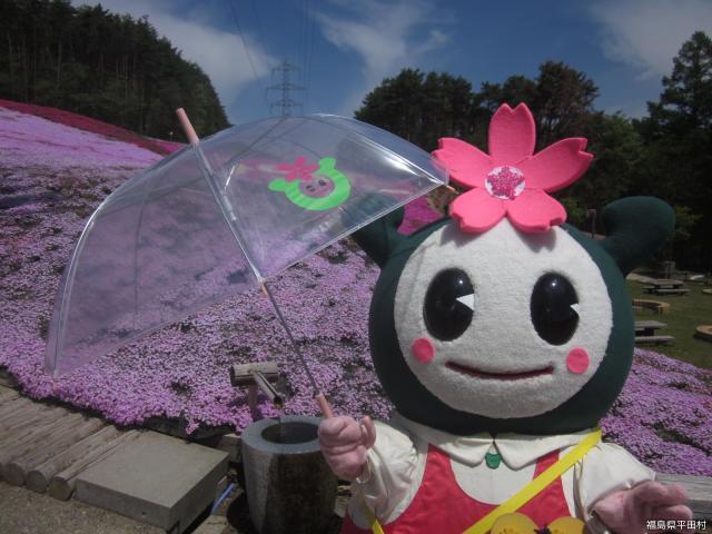 ジュピアランドひらた「芝桜まつり」