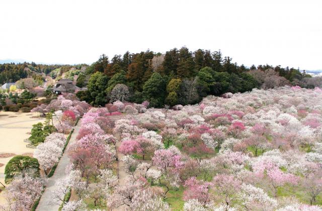 弘道館開館180年記念 第125回水戸の梅まつり