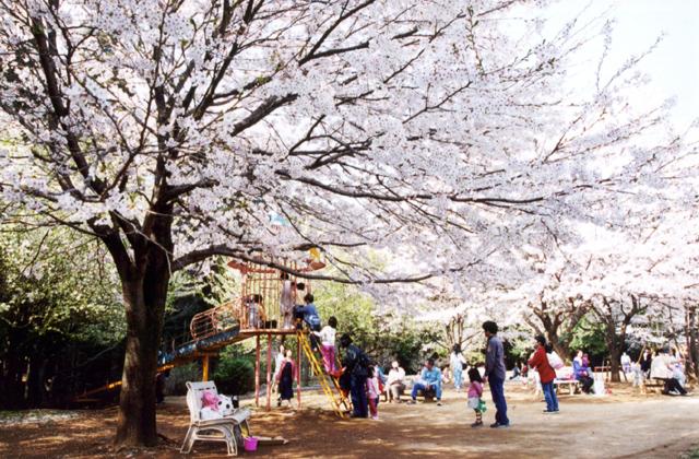 龍ケ崎森林公園