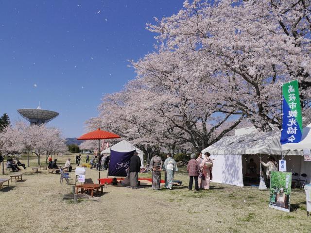 第17回高萩桜まつり