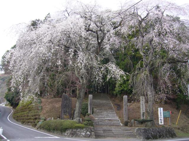 Komatsu-ji Temple★K1203