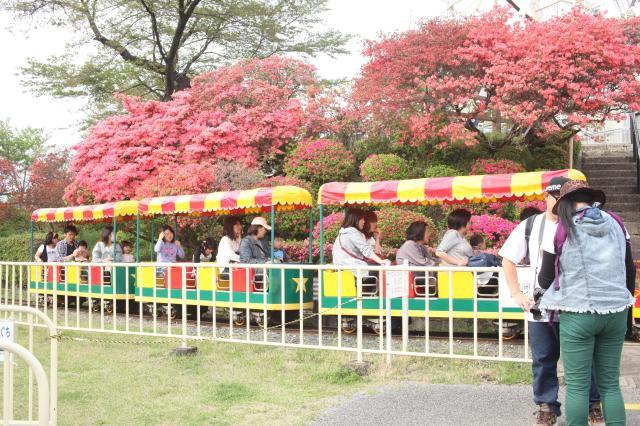 千手山公園つつじ祭り