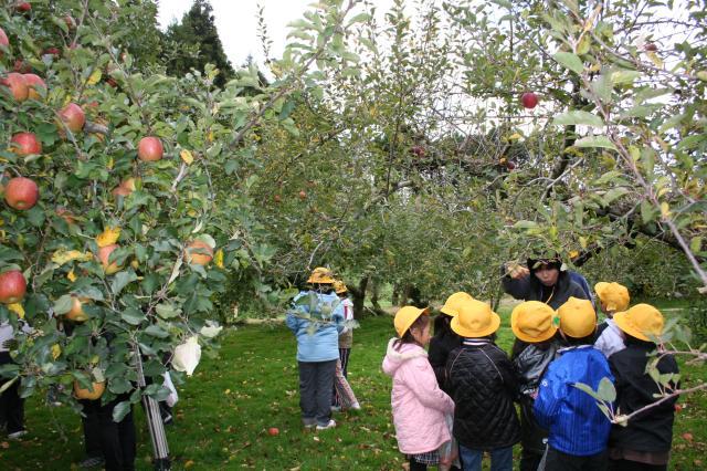 矢板観光りんご園