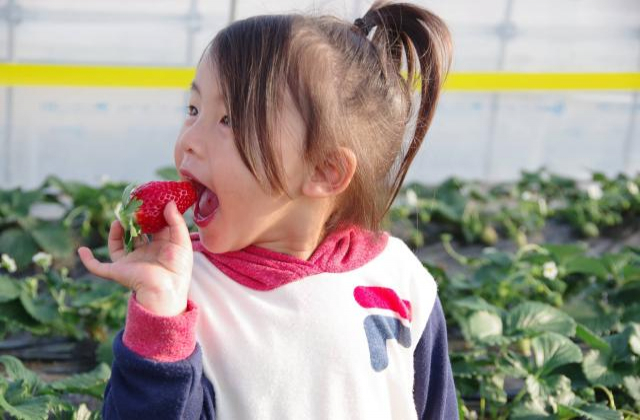 Mashiko Strawberry Farm