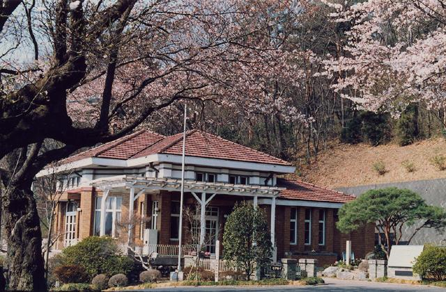 水道山公園の桜