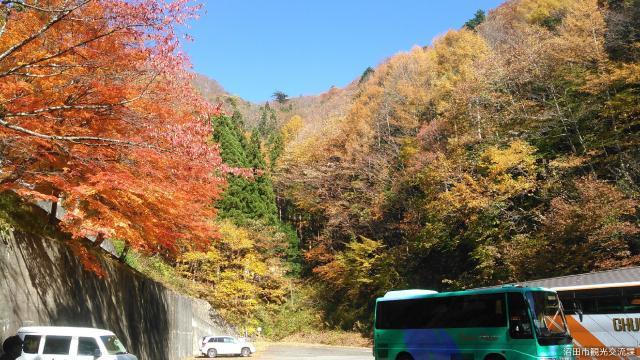 迦葉山の紅葉