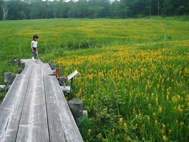 玉原湿原遊歩道