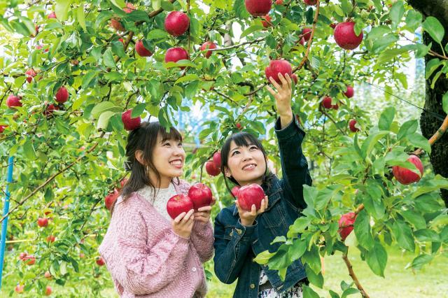観光りんご園