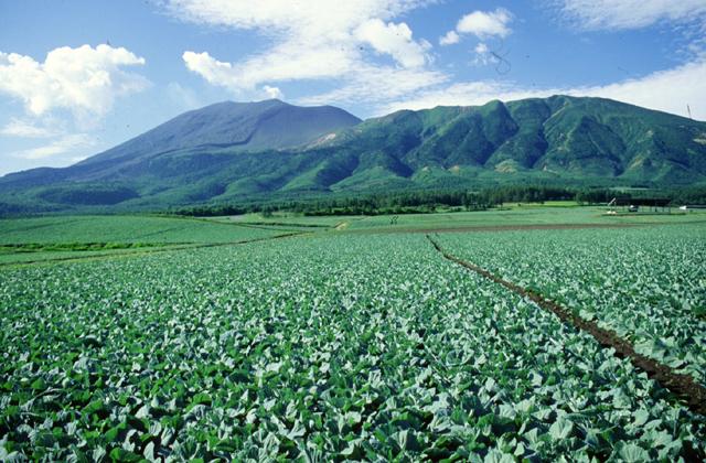 高原キャベツ畑