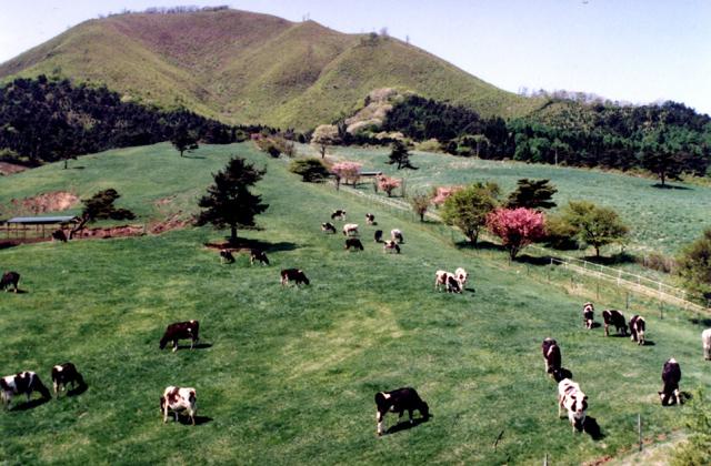 たかやま高原牧場