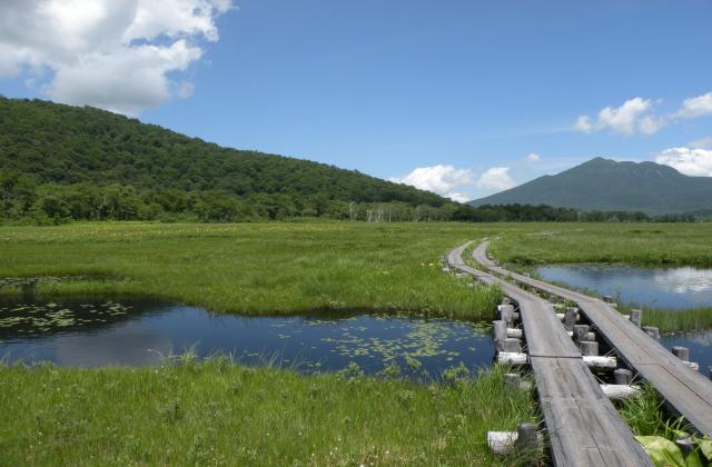 尾瀬国立公園