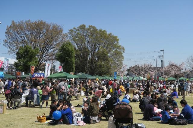 若泉公園桜まつり