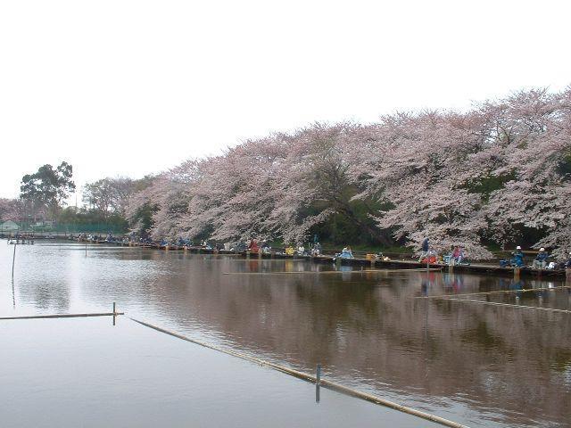 【2020年中止】道満河岸春季へら鮒つり大会