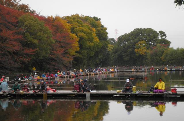 道路滿河岸秋季刮刀鯽魚釣魚大會