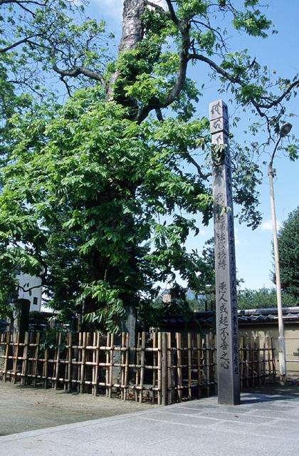 多聞寺のムクロジ