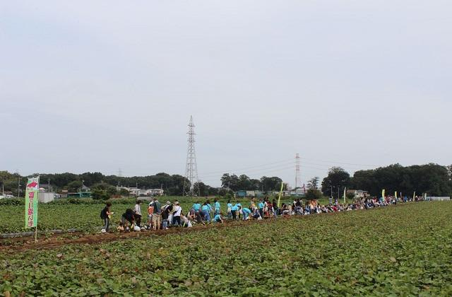 The 9th World Best Potato Digging Festival
