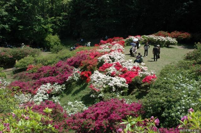 【2021年開催中止】五大尊花木公園つつじ祭り