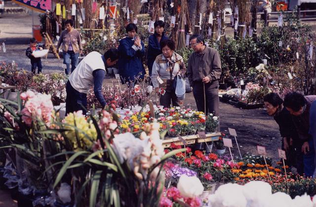 春祭り(植木市)