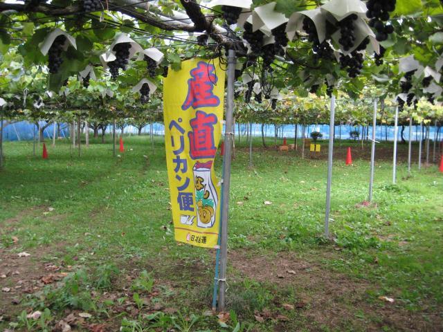 千葉中央観光農園