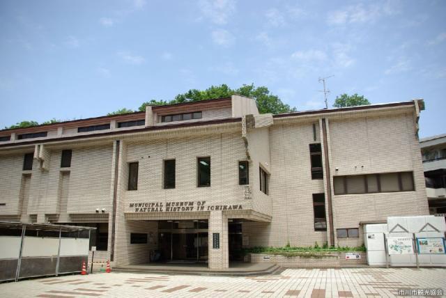市川自然博物館