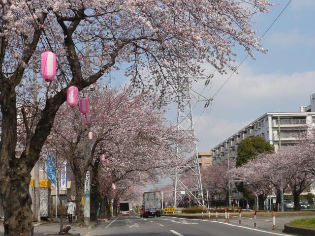 六実桜まつり