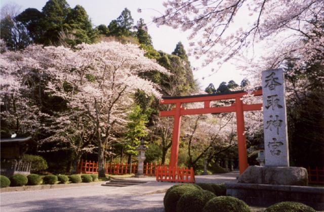 香取神宮的櫻花
