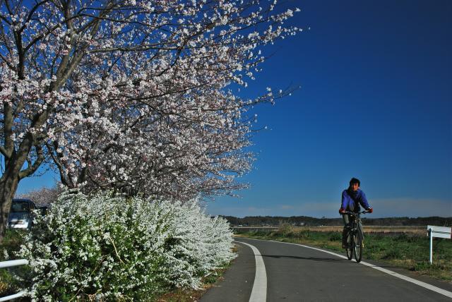 印旛沼サイクリングロード