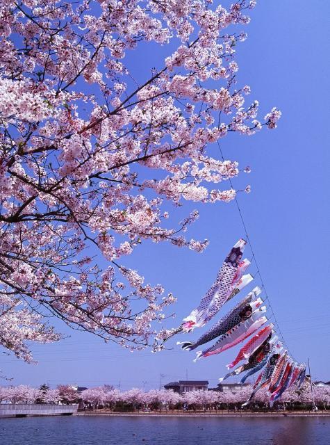 袋公園桜まつり
