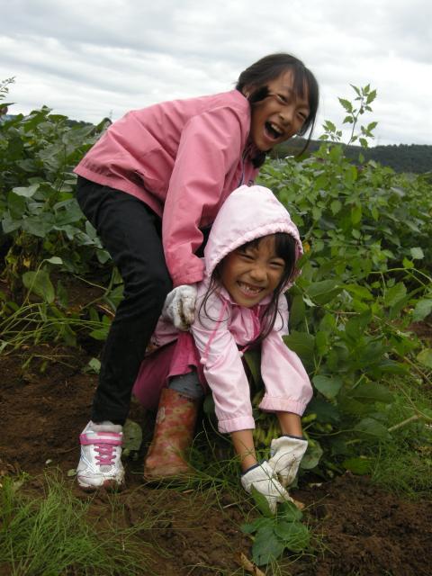 【開催未定】きみつ枝豆収穫祭