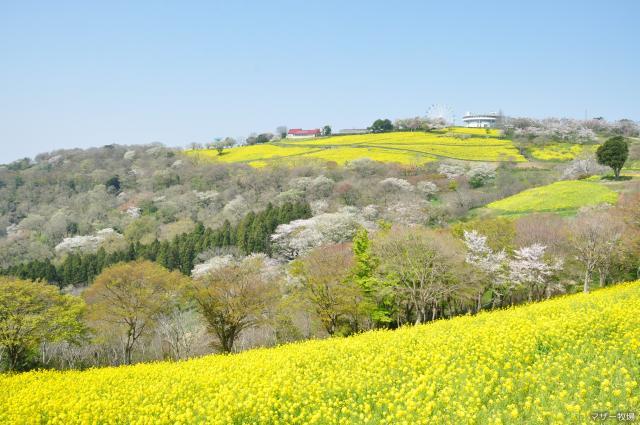 マザー牧場の春