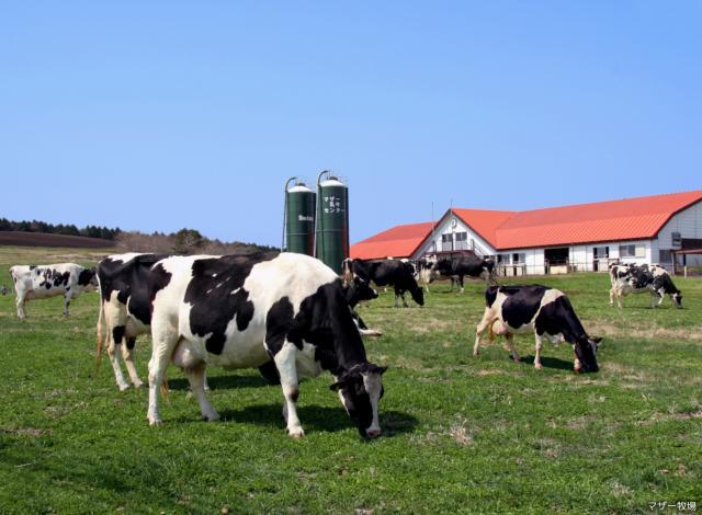 マザー牧場牛舎