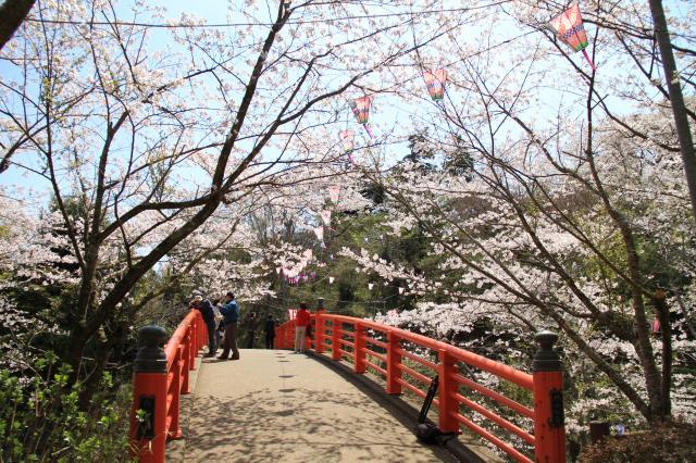小見川城山公園的櫻花、杜鵑花
