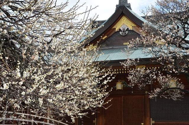The 63rd Bunkyo Ume Matsuri (Plum Festival)