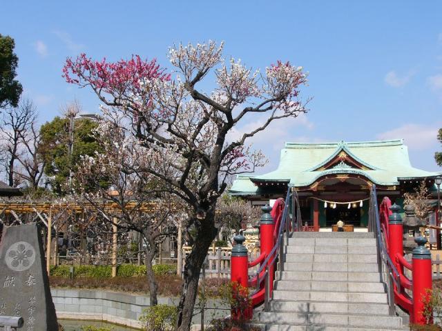 Kameido-Tenjin Shrine plum Festival