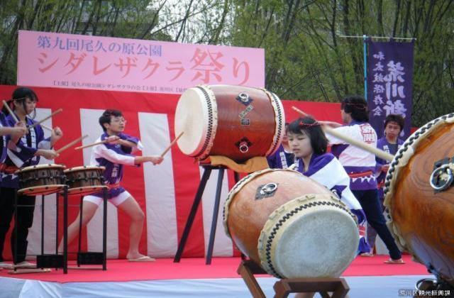【2020年中止】シダレザクラ祭り(都立・尾久の原公園)