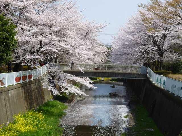 仙川平和公園