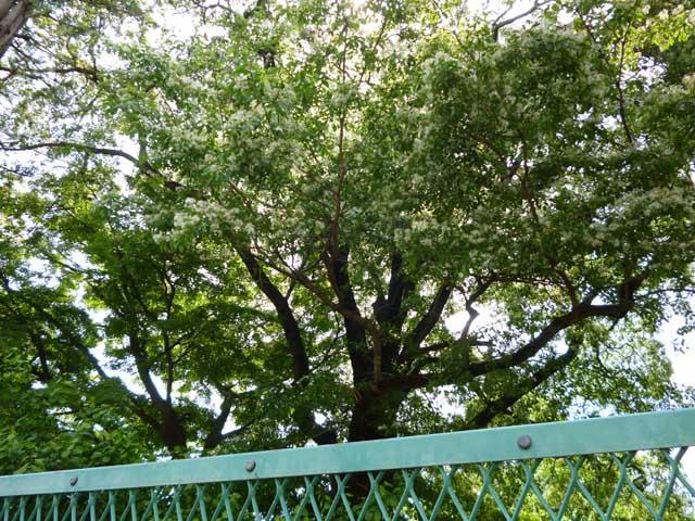 なんじゃもんじゃの森 三鷹市こども林間研修広場