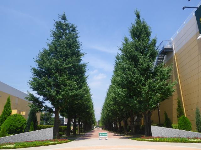 昭和の森いちょう並木