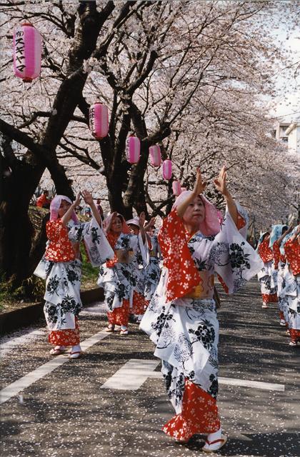 第36回ふっさ桜まつり
