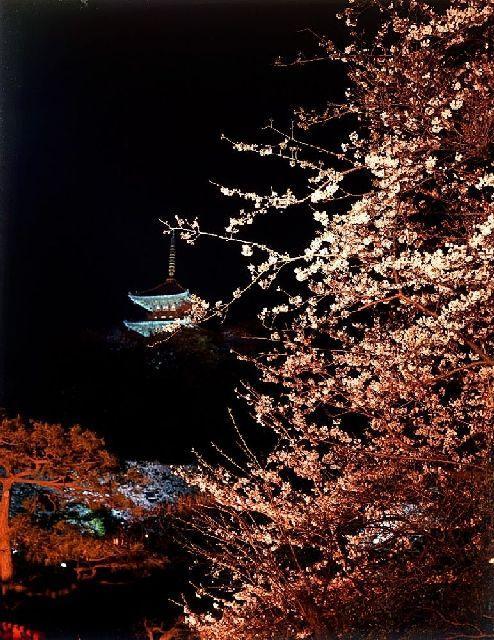 【2021年開催中止】三溪園観桜の夕べ