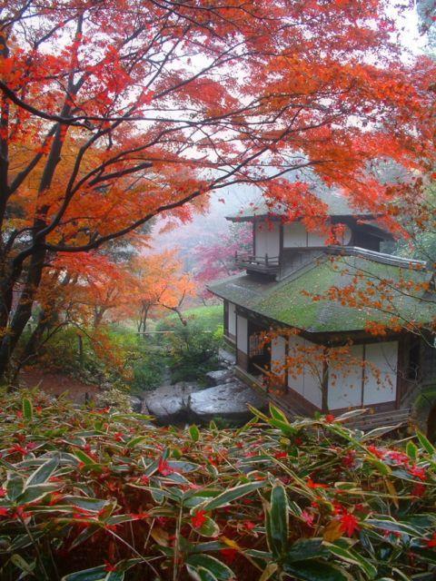 三溪園紅葉的古建築公開