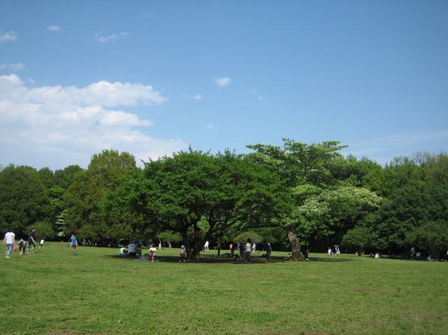 東面高根森林公園
