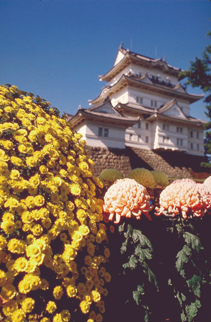 Odawara Castle Chrysanthemum Exhibition★14206ba2210116624