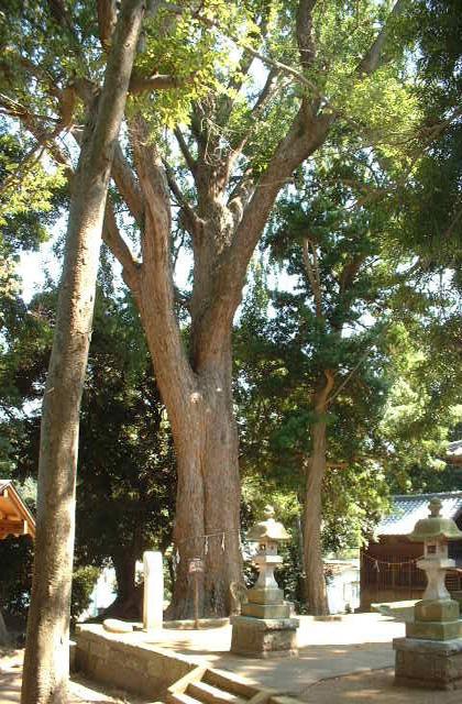 五霊神社の大イチョウと周辺の樹木