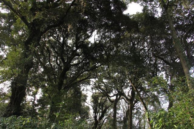 篠窪の椎の木森