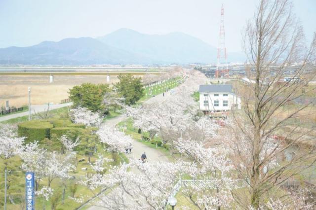 【中止】つばめ桜まつり