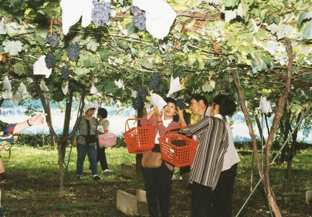 荒川峡ブドウ園
