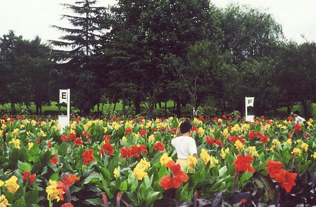 となみカンナフェスティバル夏祭りin砺波チューリップ公園