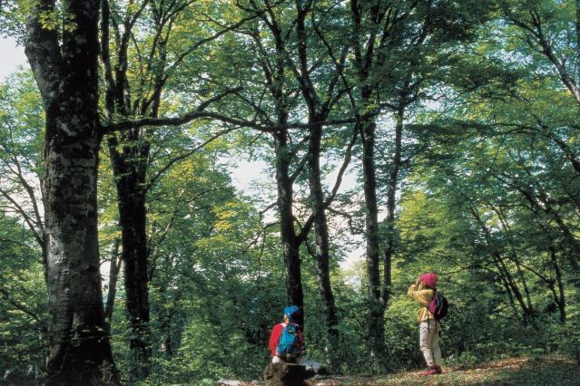 美女平遊歩道コース