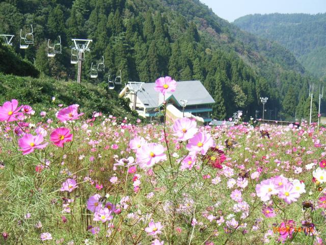大倉岳高原まつり